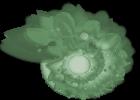 Escargot amande